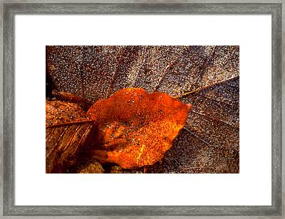 Frozen Leaf Framed Print