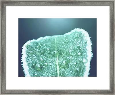 Frozen Leaf Framed Print by Wim Lanclus