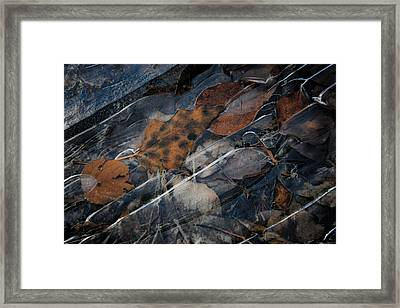Frozen Leaves In Fall Framed Print by Jonathan Hansen