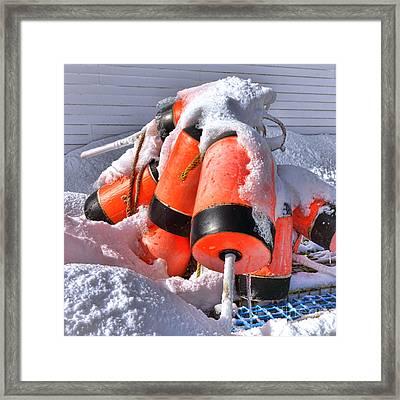 Frozen Lobster Trap Buoys In Winter Framed Print