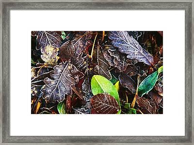 Frozen Oak Leaves, Glenveagh National Framed Print