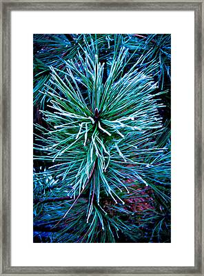 Frozen Pine Needles  Framed Print
