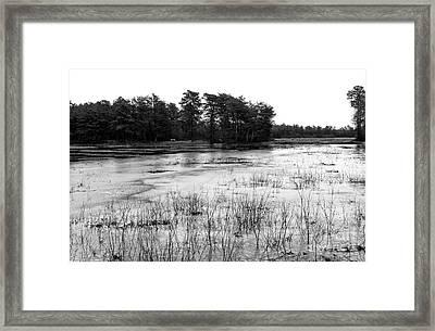 Frozen Pineland Pond Framed Print