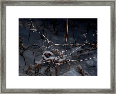 Framed Print featuring the photograph Frozen Rain by Annette Berglund