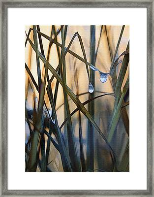 Frozen Raindrops Framed Print by Sharon Foster