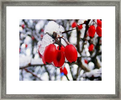 Frozen Red Berries Framed Print by Ms Judi