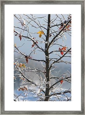 Frozen Remnants Framed Print