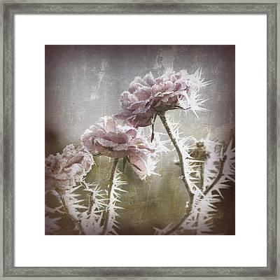 Frozen Roses Framed Print