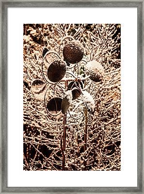 Frozen Stillness Framed Print