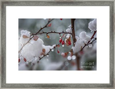 It's Berry Cold Framed Print