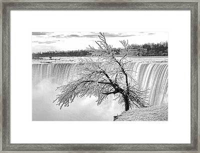 Frozen Tree Near Niagara Falls Framed Print