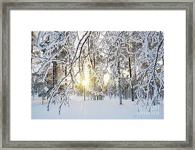 Frozen Trees Framed Print by Delphimages Photo Creations