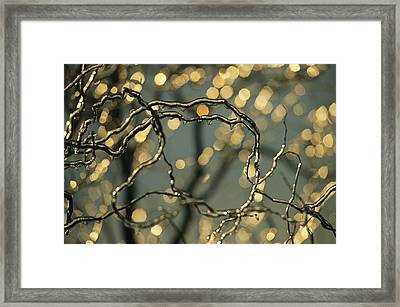 Frozen Twigs Of A Corkscrew Willow Framed Print by Raymond Gehman