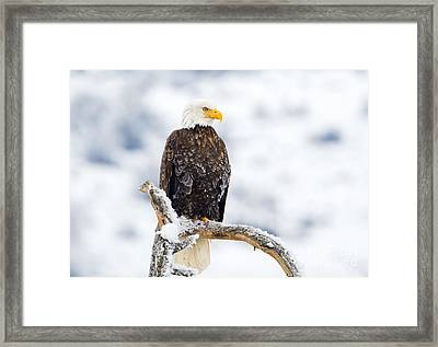 Frozen Watch Framed Print by Mike Dawson