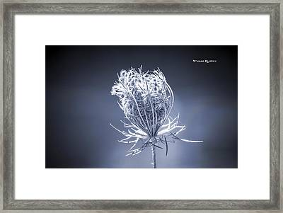Framed Print featuring the photograph Frozen Wildflower by Stwayne Keubrick