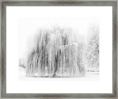 Frozen Willow Framed Print by Mike Dawson