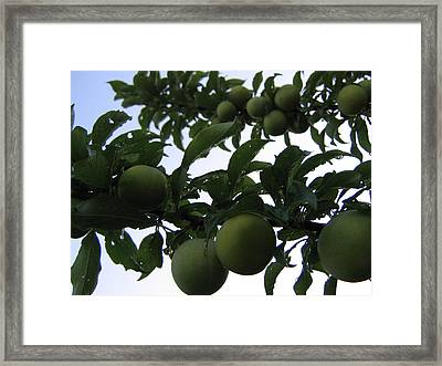 Fruit And Sky_raindrops Framed Print by Barbara Yearty