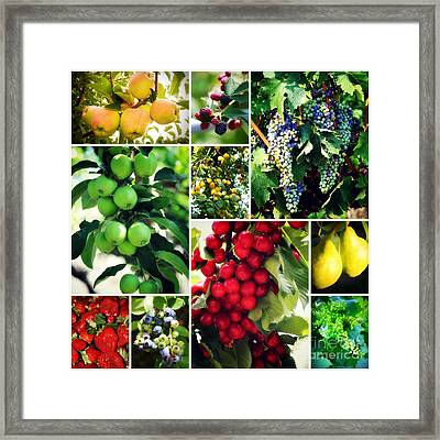 Fruit Collage Framed Print by Carol Groenen