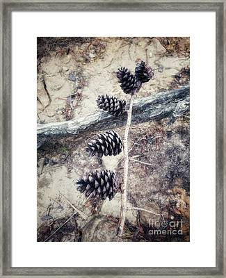 Fruit Of The Pine Framed Print