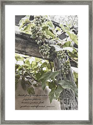 Fruit Of The Spirit Framed Print by Diane Macdonald