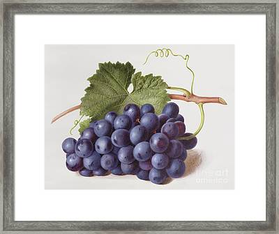 Fruit Of The Vine Framed Print