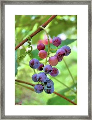 Fruit Of The Vine Framed Print by Kristin Elmquist