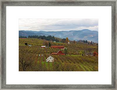 Fruit Orchard Farmland In Hood River Oregon Framed Print