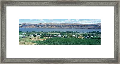 Fruit Orchards, Columbia River Gorge Framed Print by Panoramic Images