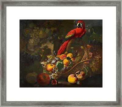 Fruit Still Life With A Parrot Framed Print