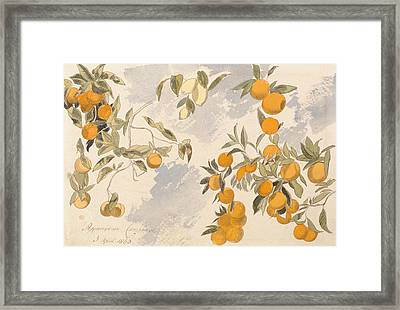 Fruit Trees, 3 April 1863 Framed Print