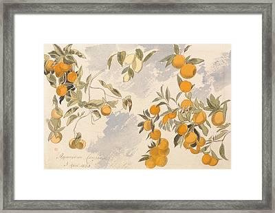 Fruit Trees, 3 April 1863 Framed Print by Edward Lear