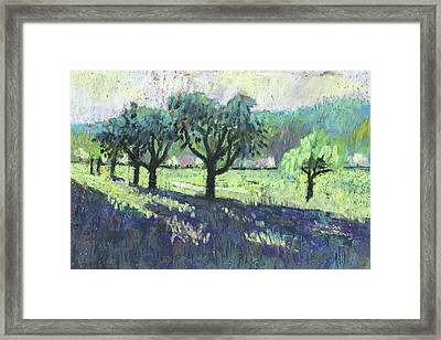 Fruit Trees, Spring Landscape Framed Print