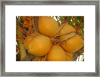 Fruitful Framed Print by Lori Mellen-Pagliaro