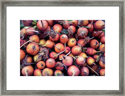 Fruits And Vegetable At Farmer Market Framed Print