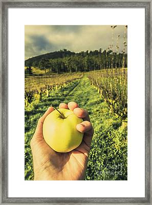 Fruits Of Labour Framed Print by Jorgo Photography - Wall Art Gallery