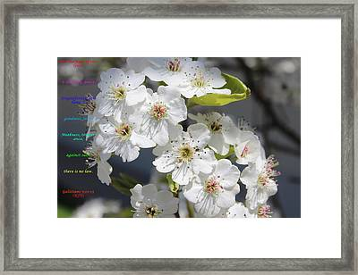 Fruits Of The Spirit Framed Print by Cliff Ball