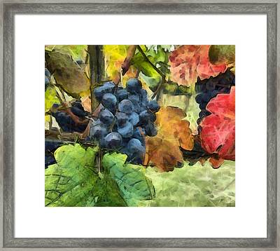Fruits Of The Vine Framed Print by Judy Coggin