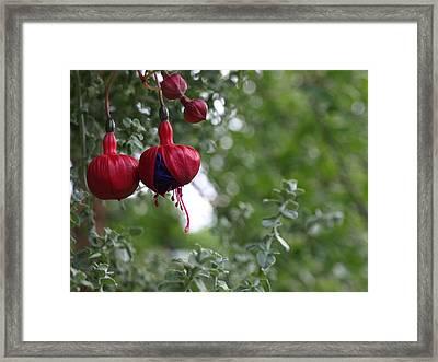 Fuchsia - 1 Framed Print
