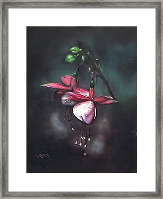 Fuchsia And Dew  Framed Print