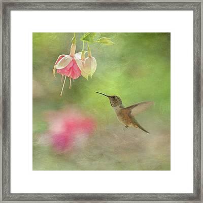 Fuchsia And Hummingbird Framed Print