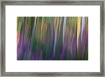 Fuchsia At Dawn Framed Print