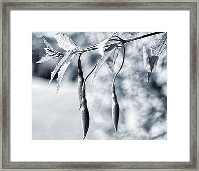 Framed Print featuring the photograph Fuchsia Bud by Keith Elliott