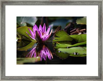 Framed Print featuring the photograph Fuchsia Dreams by Suzanne Gaff