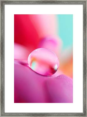 Fuchsia Drop Framed Print