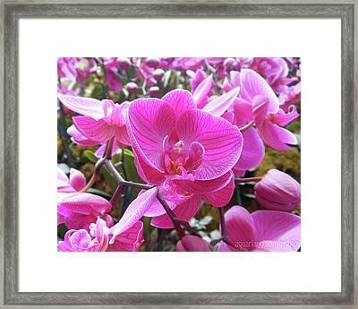Fuchsia Flower Field Framed Print