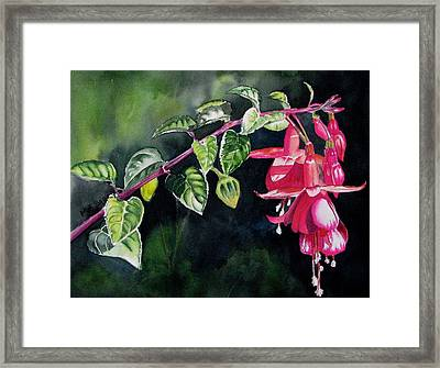 Fuchsia Framed Print by Maria Barry