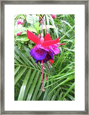 Framed Print featuring the photograph Fuchsia by Mary Ellen Frazee