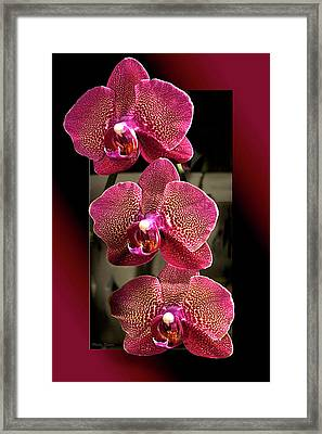 Fuchsia Orchids Oof Framed Print