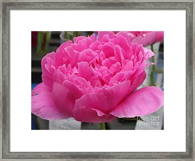 Fuchsia Peony Framed Print