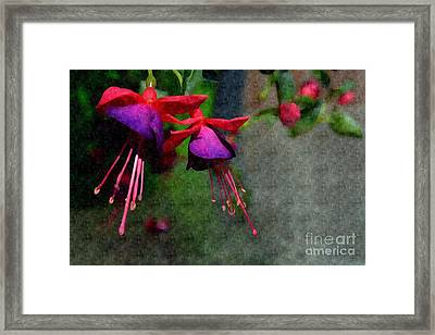 Fuchsia's Beating As One Together -silk Edit Framed Print